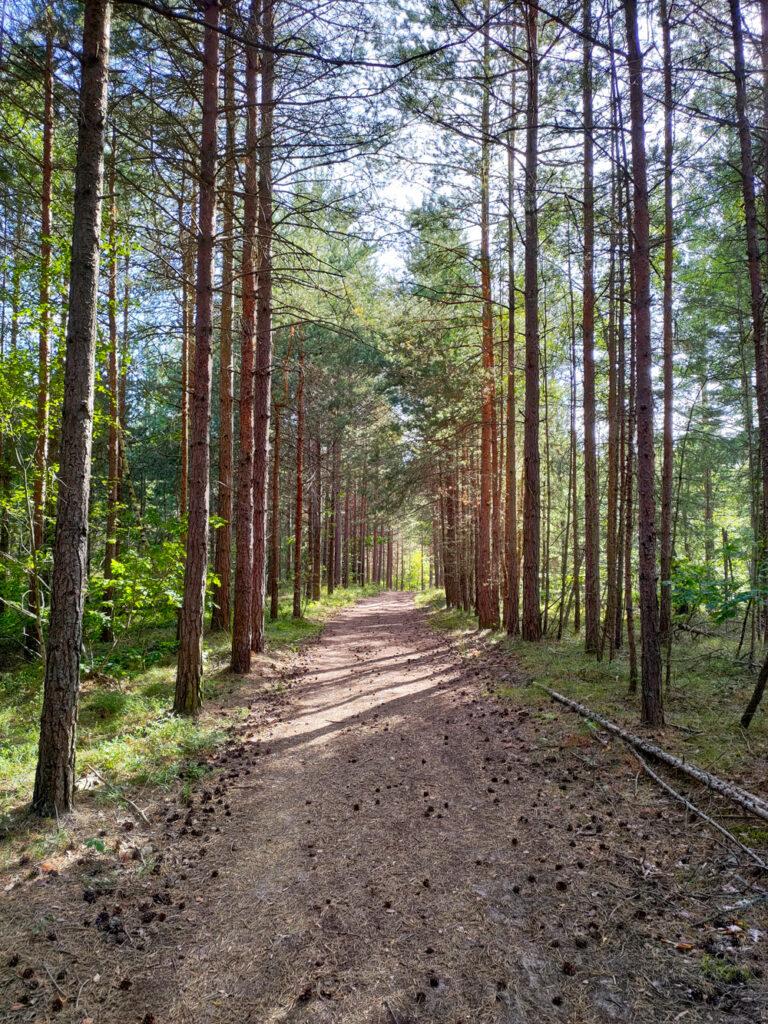 Naturstig i Rällaskogen vid Rälla på Öland.