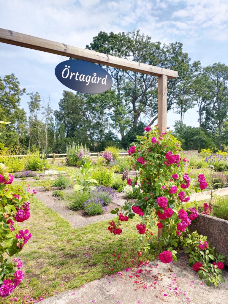 Foto av örtagården hos Ölands Örtagård i Stora Frö